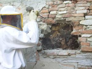 Alveare nel muro di una casa diroccata